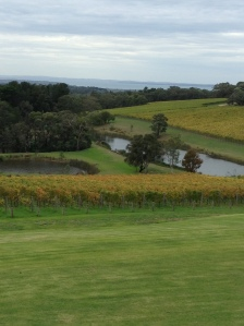 View from Port Philip Estate